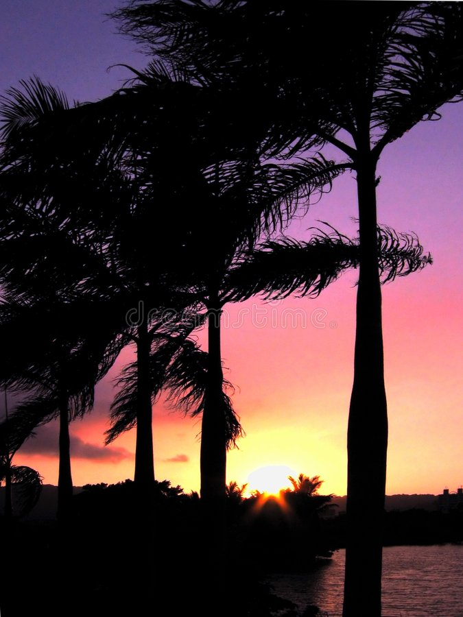 över gömma i handflatan solnedgångtrees arkivfoto