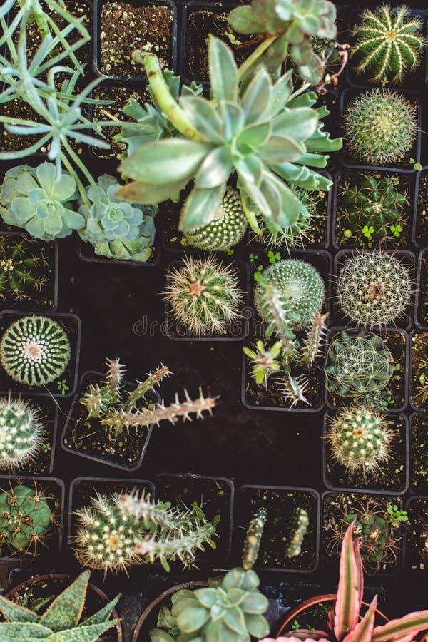 Över huvudet closeupskott av olika typer av kakturs eller kaktusväxter på ett växthus royaltyfri foto