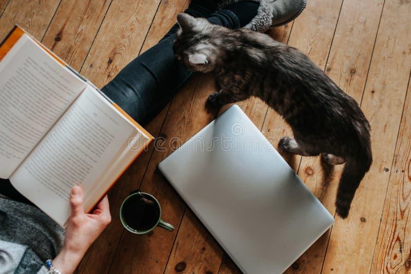 Över huvudet skott av en fluffig katt, en kvinnlig läsning en bok, en bärbar dator och en kopp te på golvet arkivbilder