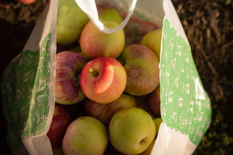 Över huvudet skott av nya äpplen i en pappers- påse fotografering för bildbyråer