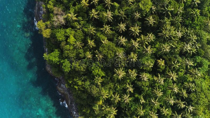 Över huvudet surrskott av blast av palmträd och turkoshavsvatten i den Ko Pu-ön i Phuket, Thailand Abstrakt textur, ställe för royaltyfri bild