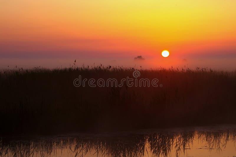 över soluppgångswamps royaltyfri fotografi
