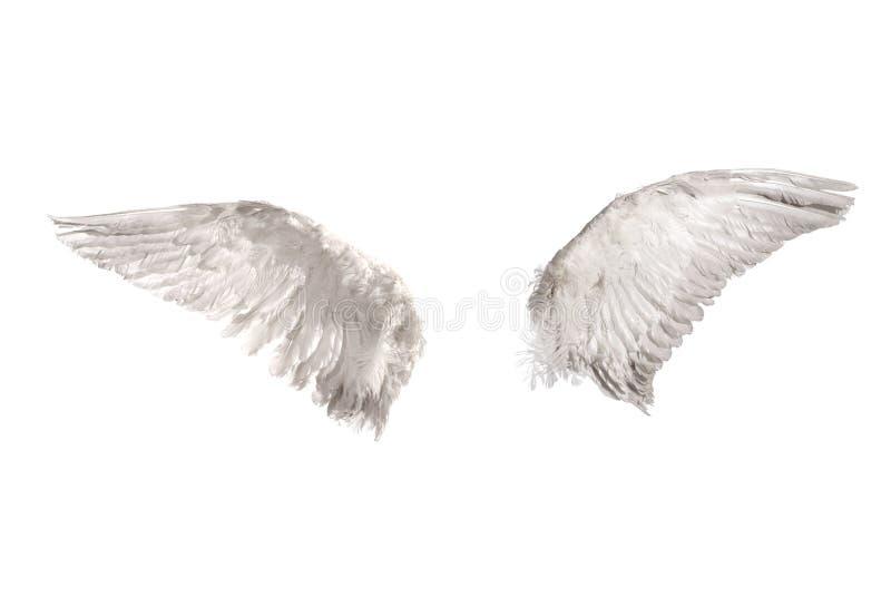 över vita vingar royaltyfria bilder