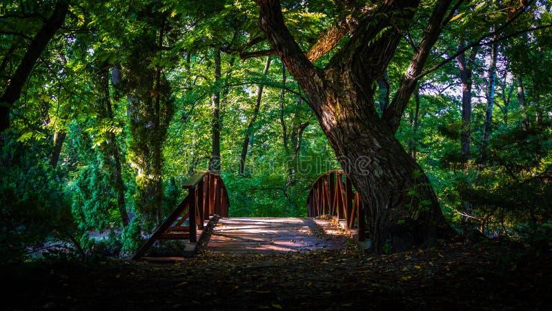 Överbrygga i skogen arkivfoton