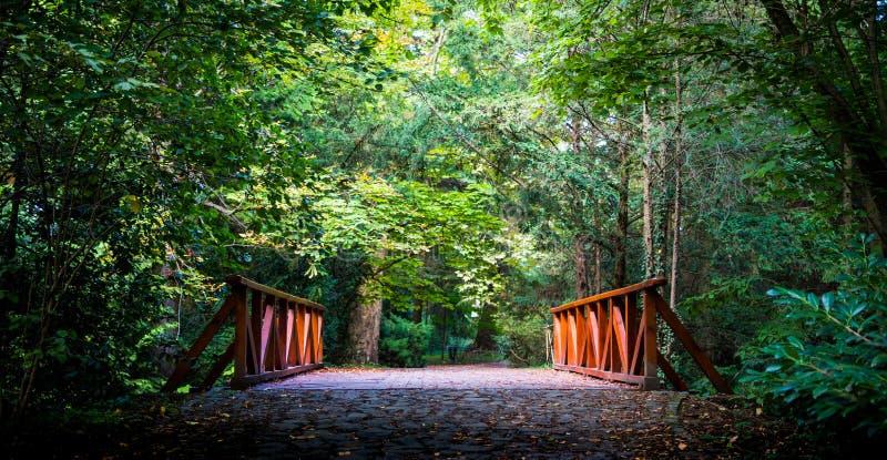 Överbrygga i skogen fotografering för bildbyråer