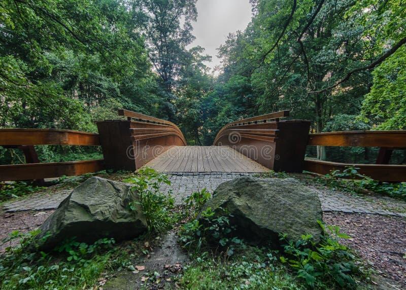 Överbrygga i skogen arkivbild