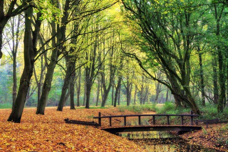 Skogen överbryggar royaltyfria bilder