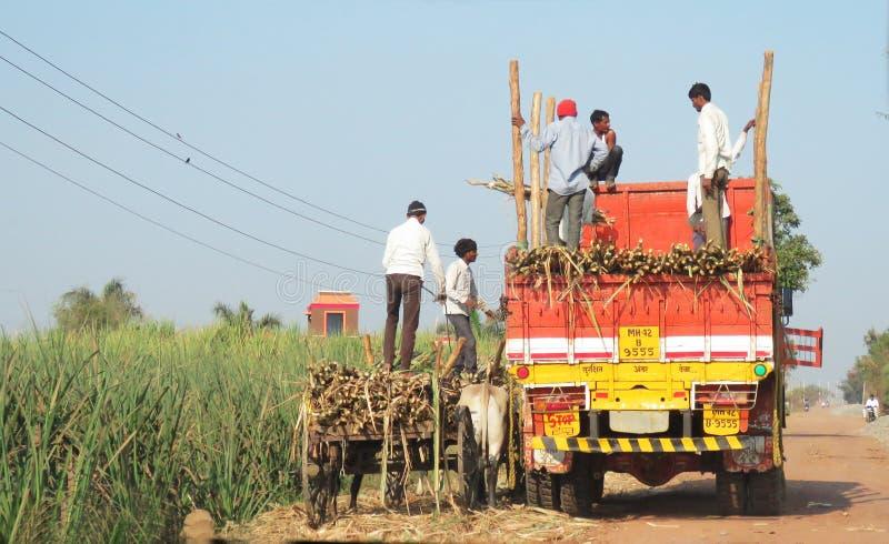 Överförande sockerrör från en oxevagn till en lastbil västra Indien royaltyfri bild