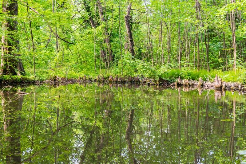 Överflödande grön vegetation med reflexion i vattensjön arkivbild