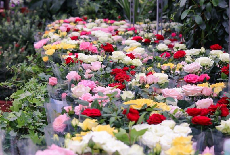 Överflödet av olika färger steg buketter och krukor i den till salu blomsterhandel- eller trädgårdmitten Selektivt fokusera arkivfoto