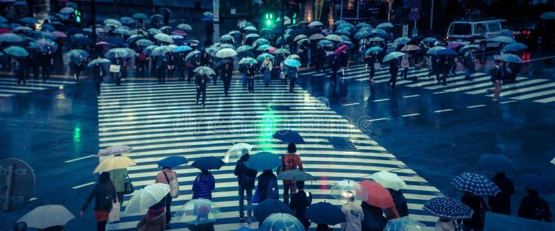 Övergångsställe i Shibuya royaltyfria foton