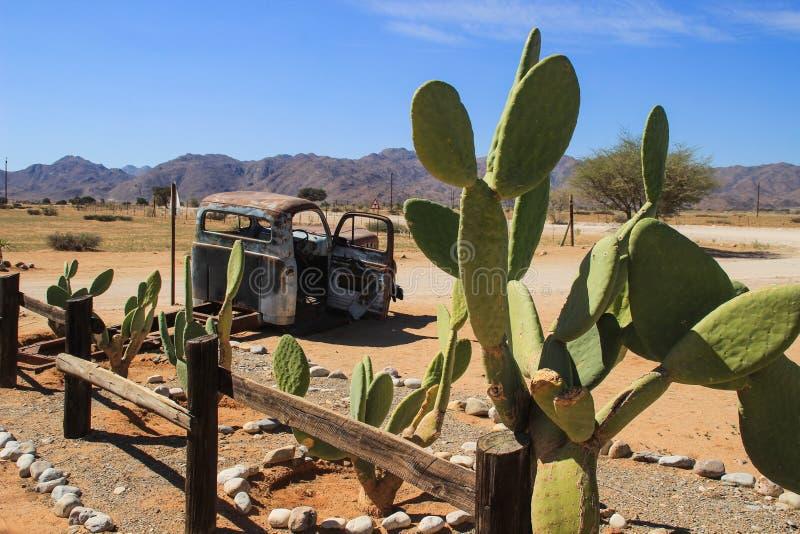 Övergav gamla rostiga bilar i öknen av Namibia omgav vid kaktuns nära den Namib-Naukluft nationalparken royaltyfri foto