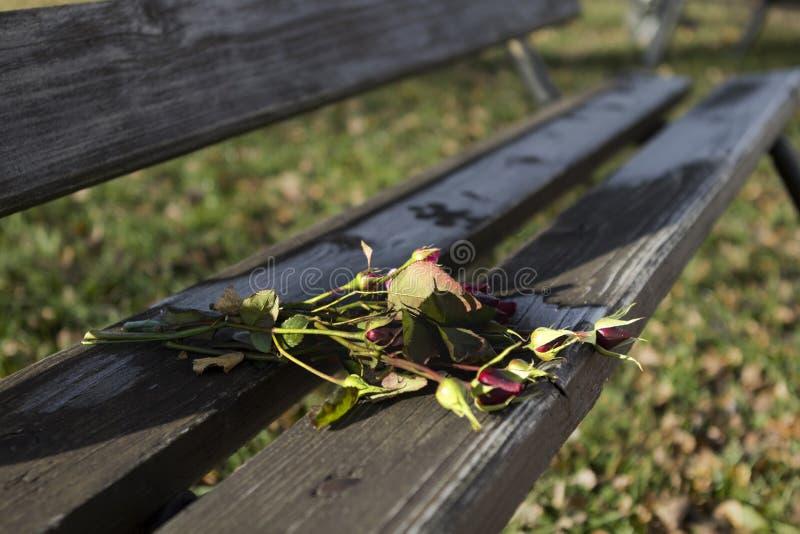 Övergav rosor på en bänk i parkera royaltyfria bilder