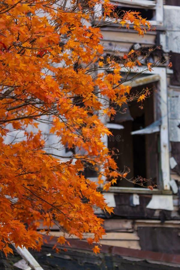 Övergett hus i höst arkivbilder