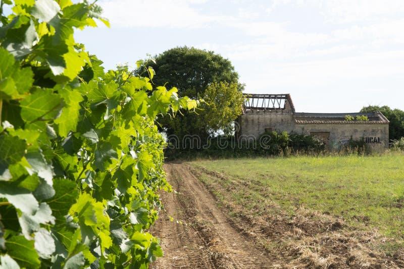 Övergett hus i mitt av vingården royaltyfri foto