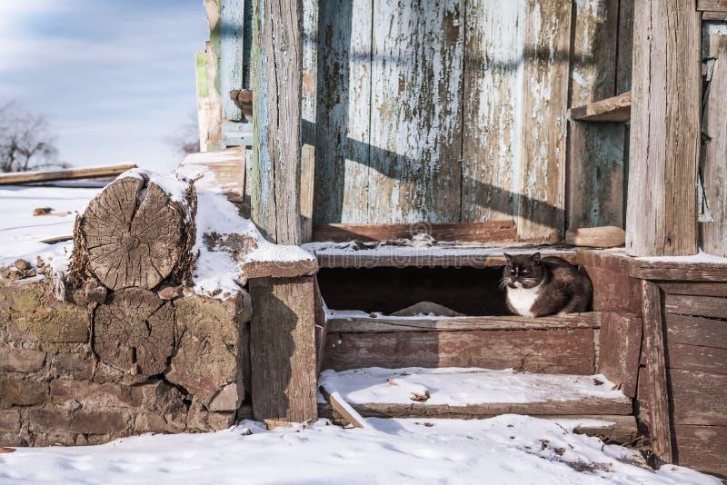 Övergett hus med den inhemska katten i vinterdag arkivbilder