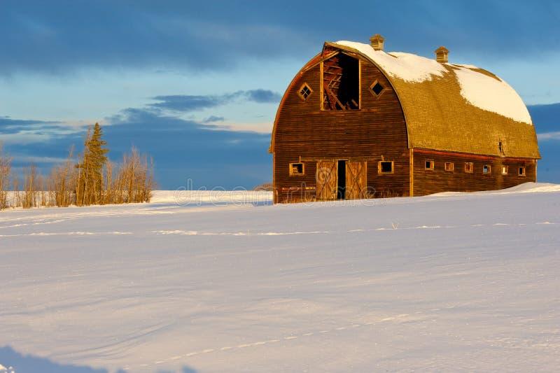Övergiven gammal ladugård i vinter arkivfoto