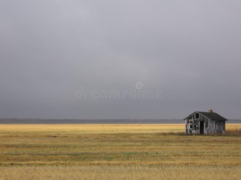 övergiven guld- hydda för fält arkivbilder