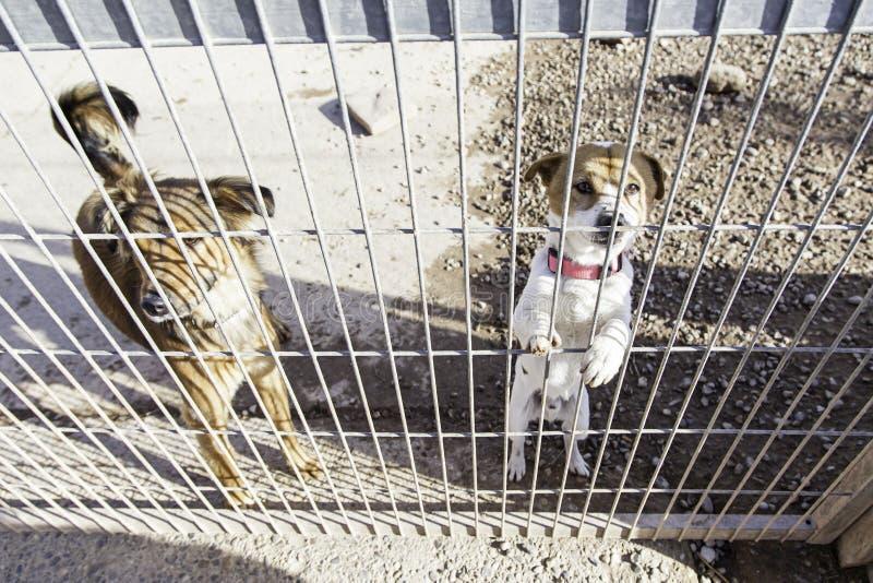 Övergiven hund och caged royaltyfria foton