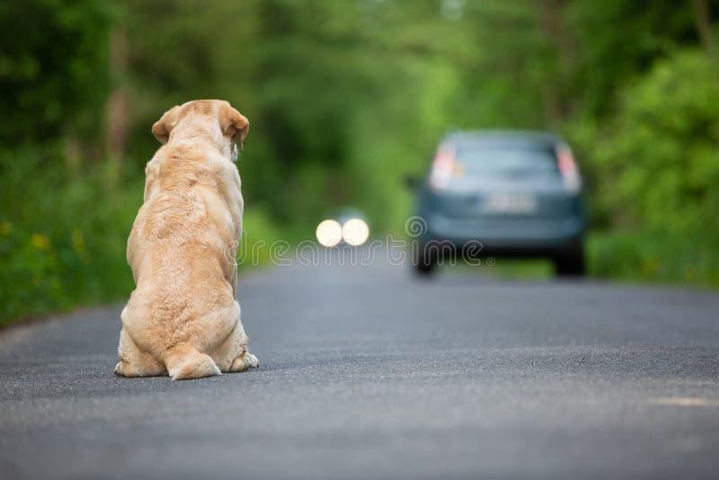 Övergiven hund på vägen fotografering för bildbyråer