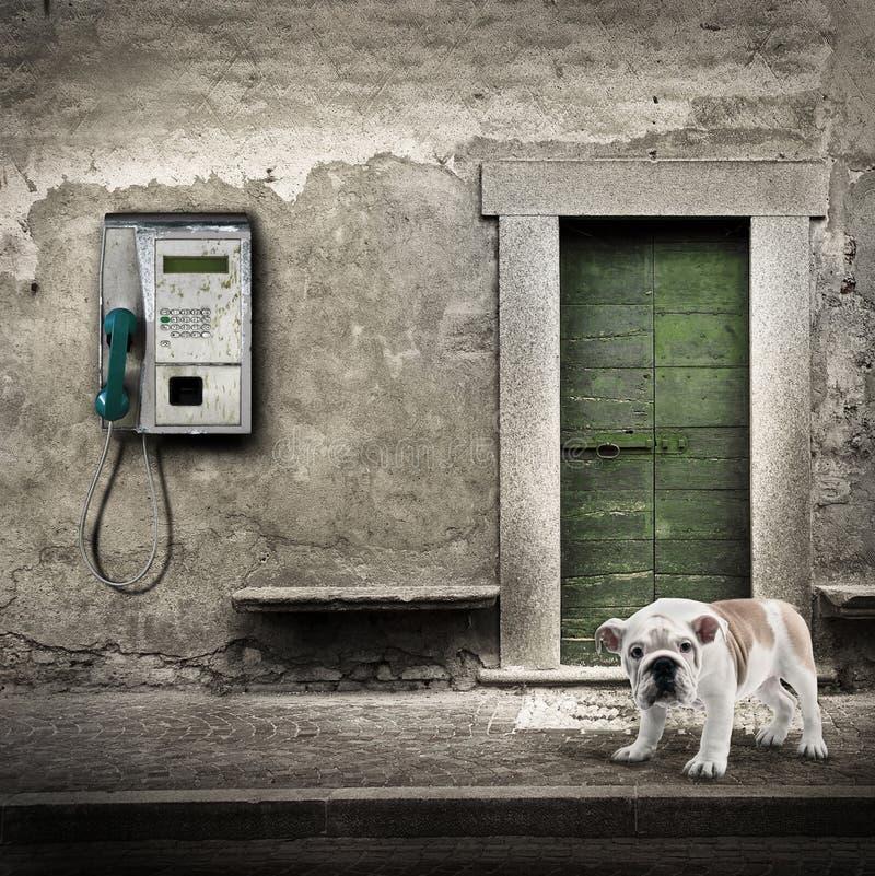 Övergiven hund som skulle gilla att kalla hjälp royaltyfri bild