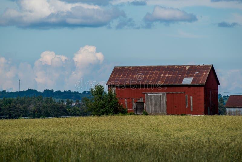 Övergiven ladugård fotografering för bildbyråer
