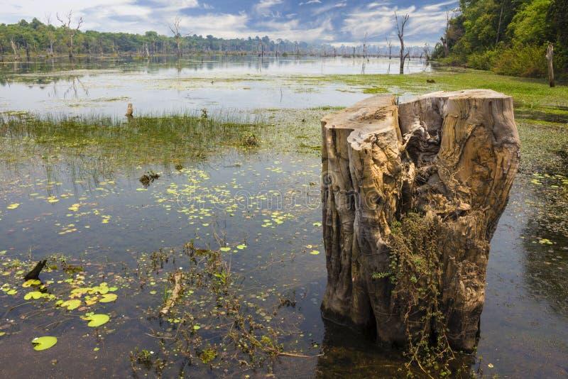 Övergiven sjö i Angkor Wat arkivbild