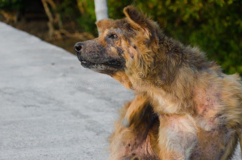 Övergiven tillfällig hund arkivfoton