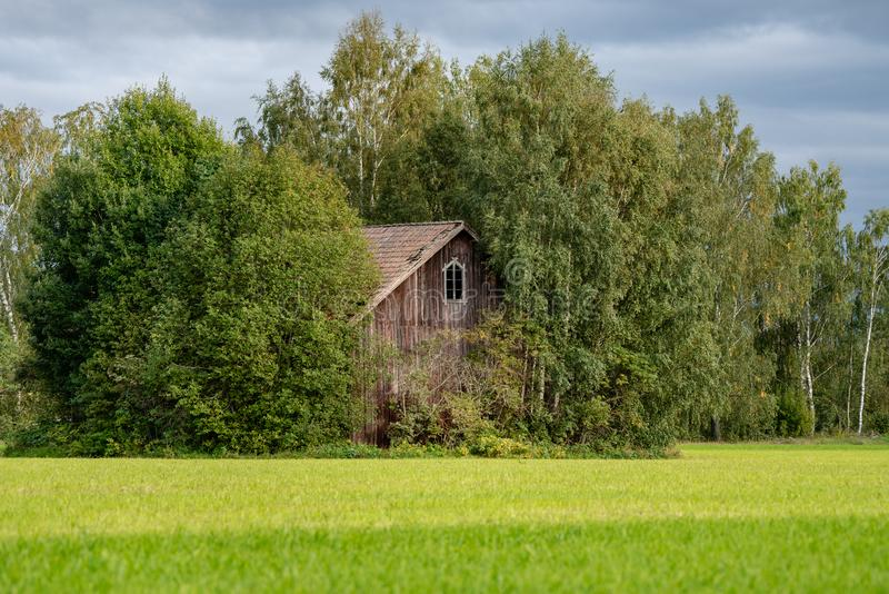 Övergiven träladugård i ljust solsken som står på slutet av ett grönt fält som totalt är bevuxet vid frodiga gröna träd royaltyfria bilder
