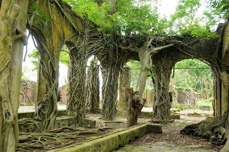 övergivet forntida rotar väggen royaltyfri fotografi