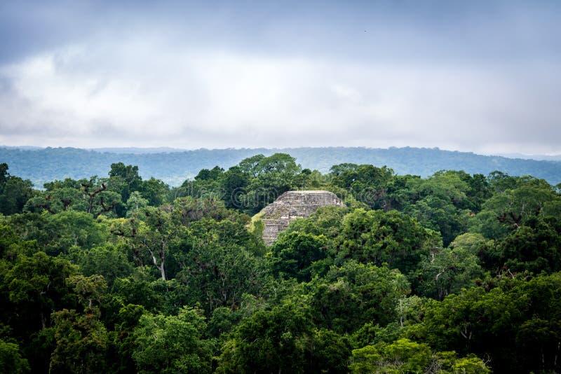 Överkant av den mayan pyramiden på den Tikal nationalparken - Guatemala fotografering för bildbyråer