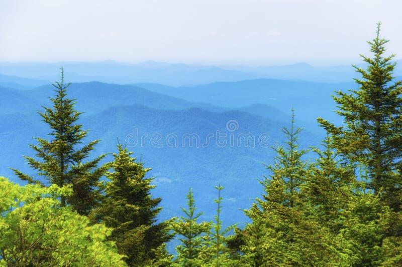 Överkant av Roan Mountain Landscape View royaltyfria bilder