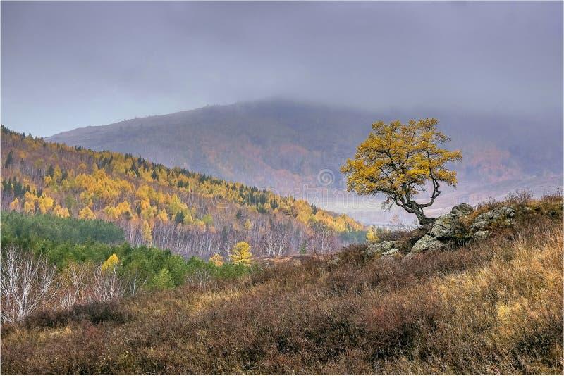 Överkanten av berget i dimman Lutning av berget med ett ensamt träd stora liggandebergberg royaltyfria bilder