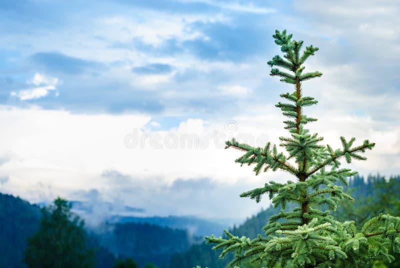 Överkanten av julgranen på bakgrunden av berg i dimman arkivbild