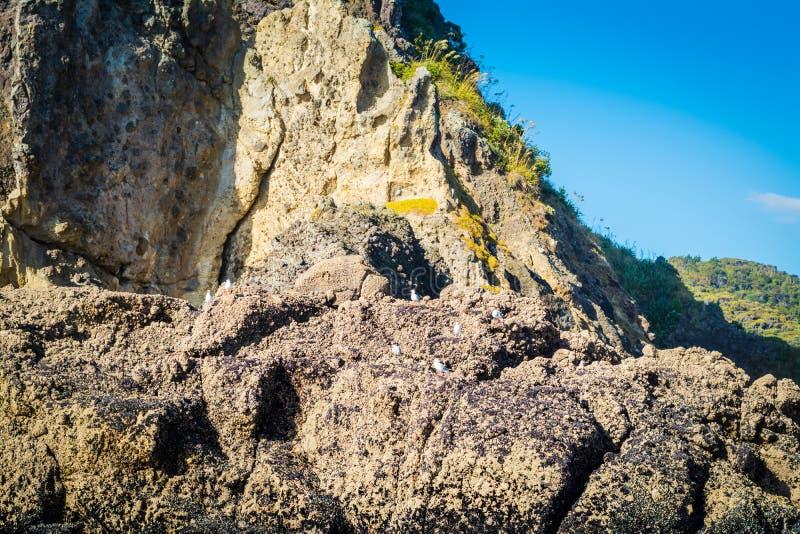 Överkanten av Lion Rock på den Piha stranden, Nya Zeeland royaltyfri fotografi