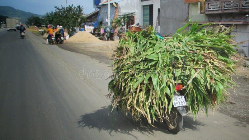 Överlastad moped royaltyfri fotografi