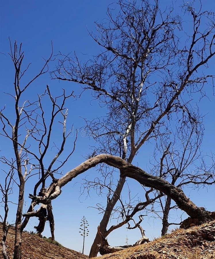 Överlevnad av träd royaltyfri bild