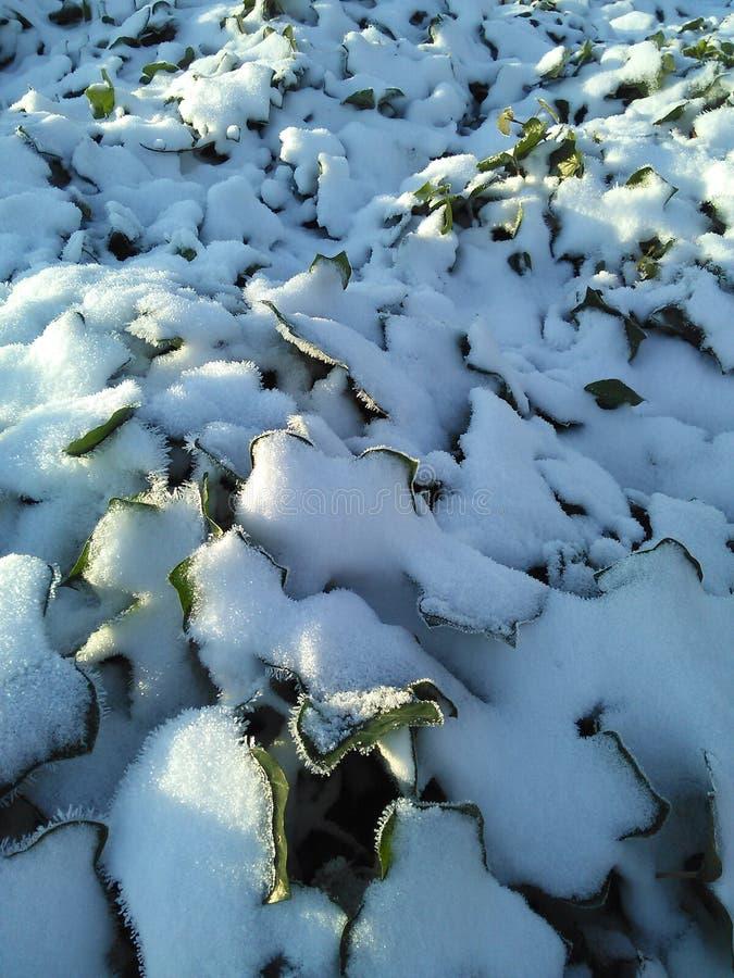 ÖVERRASKA snömorgonen arkivbilder