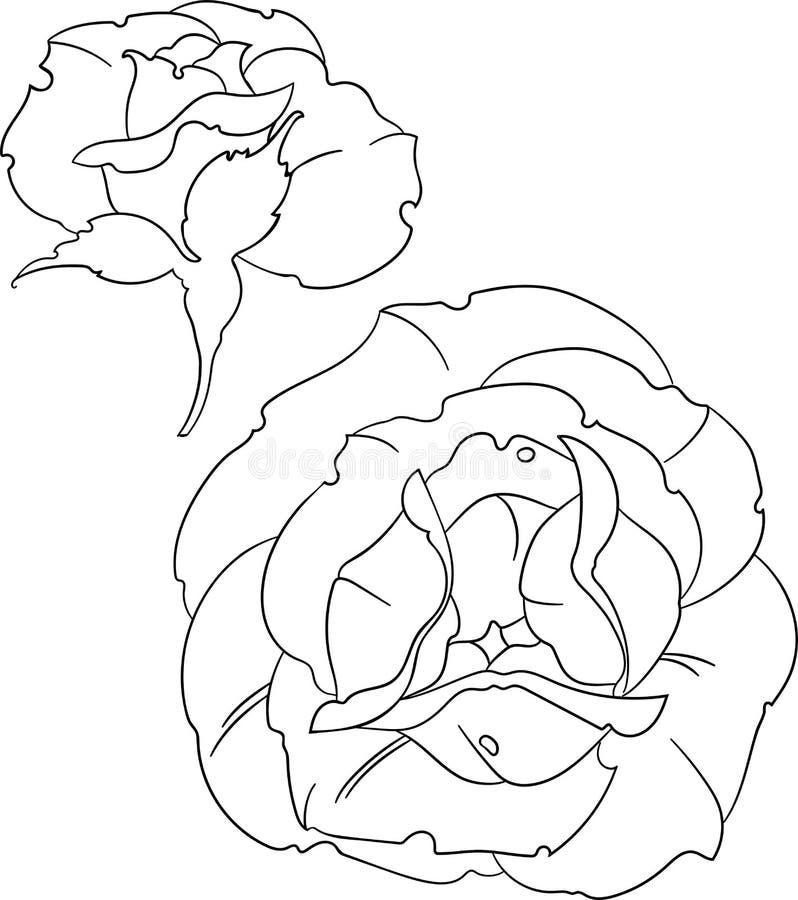 Översikt för två rosor, kontur, vektorillustration, svartvit rosa flowe royaltyfri illustrationer