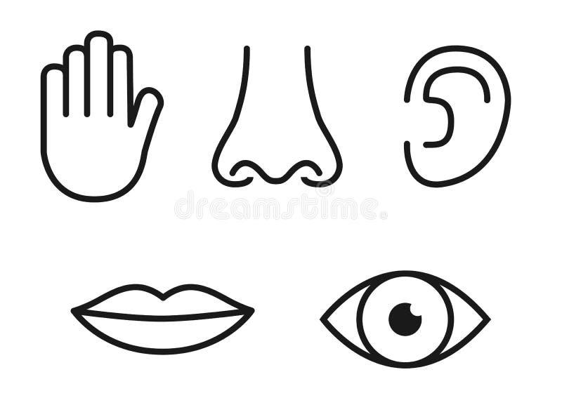Översiktssymbolsuppsättning av fem mänskliga avkänningar: visionöga, luktnäsa, höraöra, handlaghand, smakmun med tungan royaltyfri illustrationer