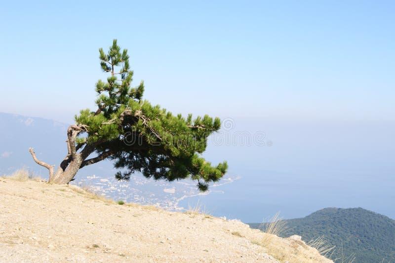 Överst av denPetri platån, Krim royaltyfri bild