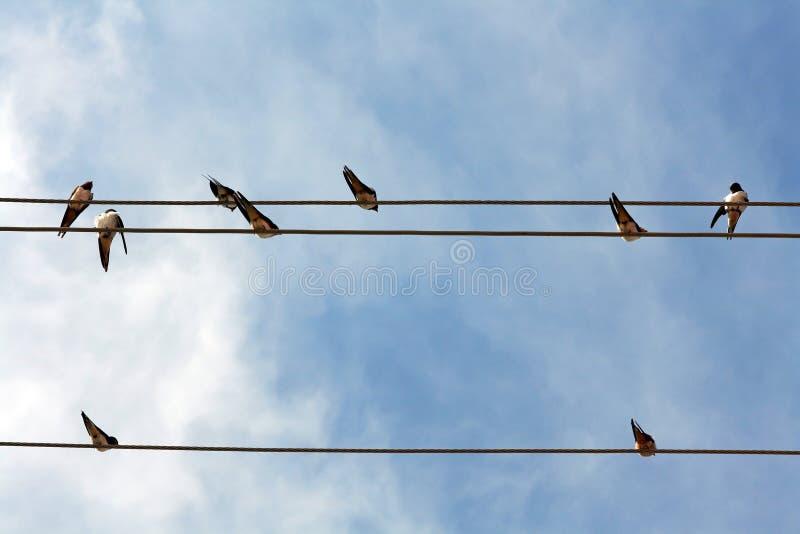 Överst på de elektriska kablarna fotografering för bildbyråer