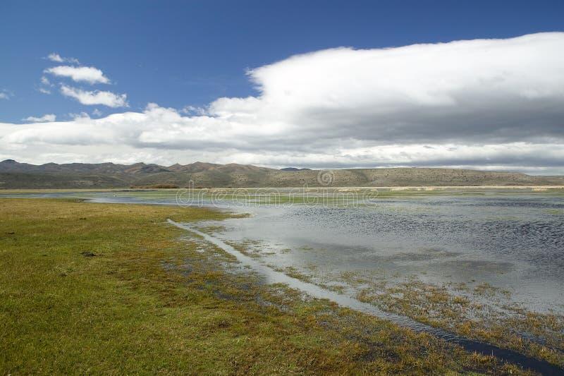 översvämmad argentina feedlot royaltyfri fotografi