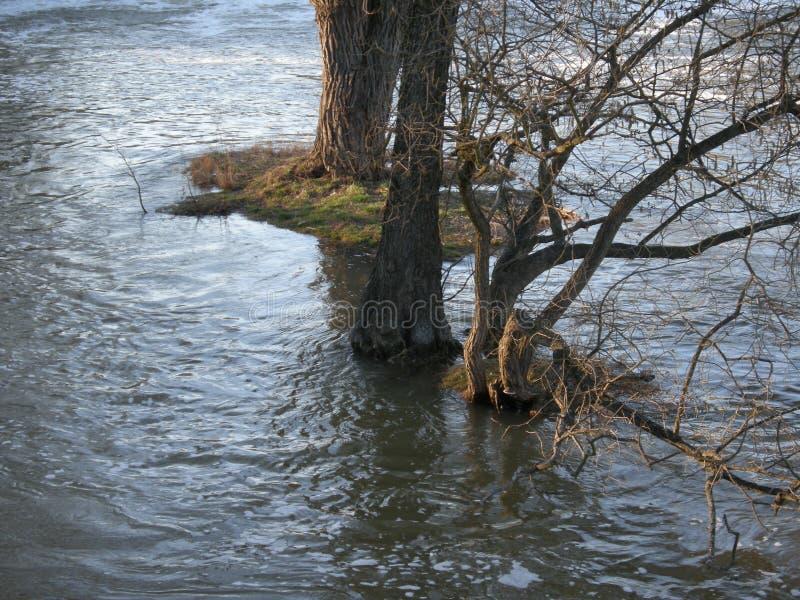 Översvämmad flod i Centraleuropa Floder och stormar är mycket gemensam tack vare klimatförändring Vatten flod royaltyfri foto