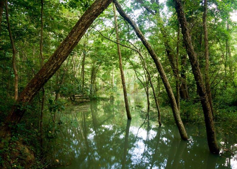 översvämmad grön dal fotografering för bildbyråer