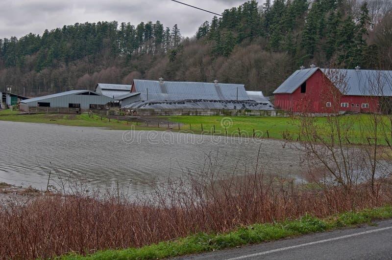 översvämmad mejerilantgård arkivfoton
