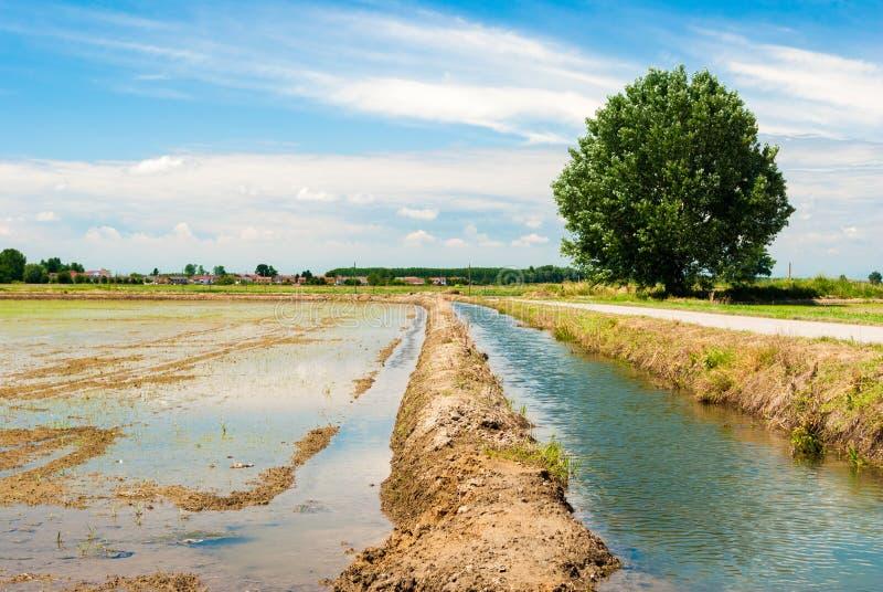 Översvämmad risfält arkivfoto