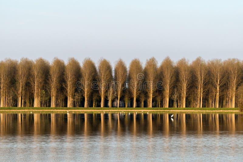 Översvämmad risfält, Lomellina (Italien) royaltyfri foto
