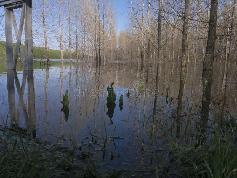översvämmad skog arkivfoto