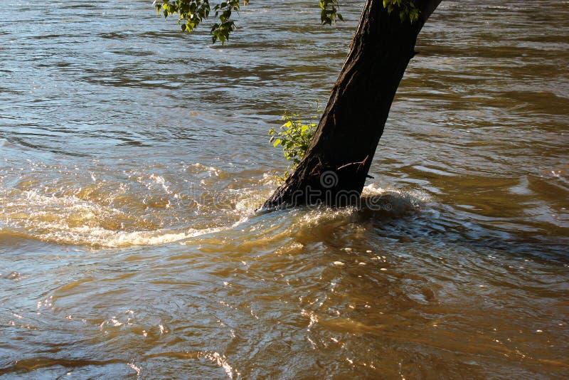 Översvämmad trädstam i vatten arkivfoto
